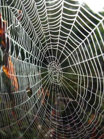 Spider Webs in Columbus Ohio